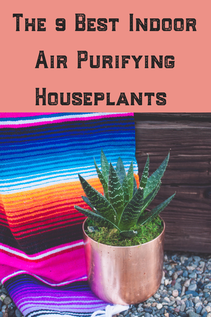 I am such the crazy plant lady! I love plants! These are my 9 favorite indoor air purifying house plants! I chose them because they are easy to care for, clean the air, are great for décor, can handle low lights, pet and kid friendly and hard to kill! This makes them a win in my book! Read on to see which would work best in your house! #houseplants #plants #indoor #decor #airpurifying #easycare #lowlight #petfriendly #hardtokill #best #ideas