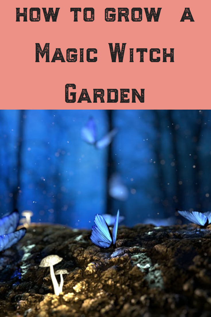 I have always been fascinated by the folklore and magic of plants, and I am not the only one. Learn about the herbs, plants, design and ideas behind some of the most legendary plants believed to be used for centuries with witch gardens. Read on for inspiration for your garden! #magic #garden #gardener #plants #herbs #design #inspiration #diy #grow #folklore